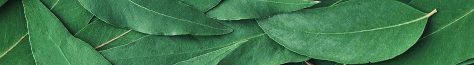EUCALIPTO: Tecnologías de conservación de frutos rojos basadas en residuos de Eucalyptus Globulus